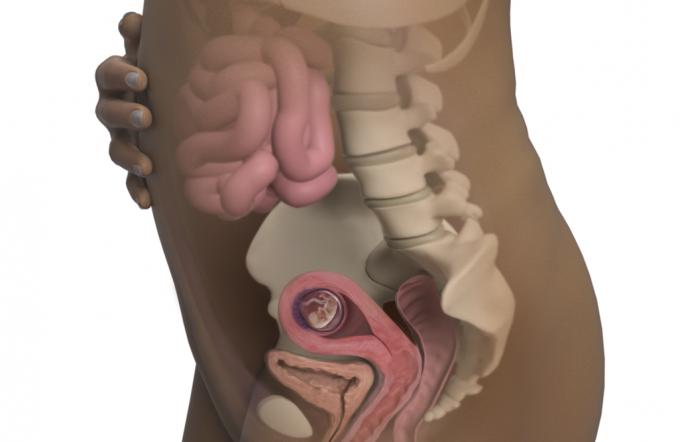 11-hafta-hamilelik