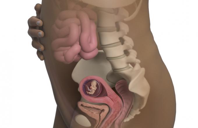 12-hafta-hamilelik